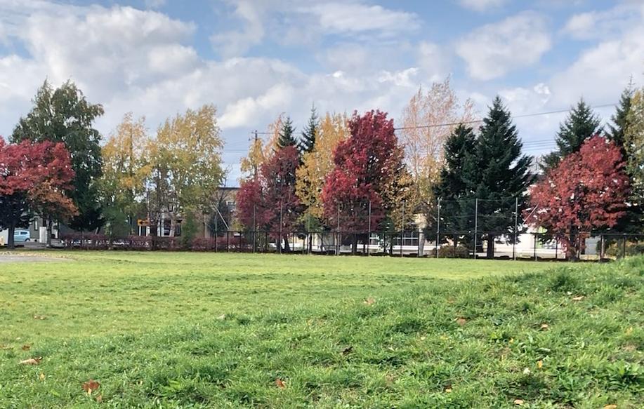 平岡中央公園紅葉