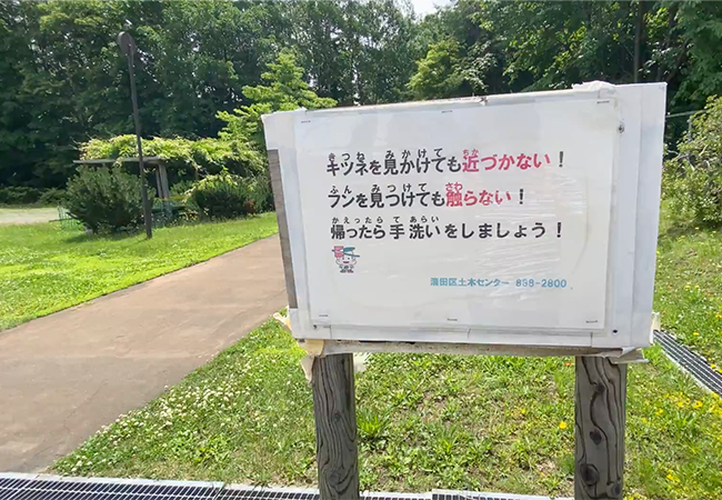 三里塚公園キツネ