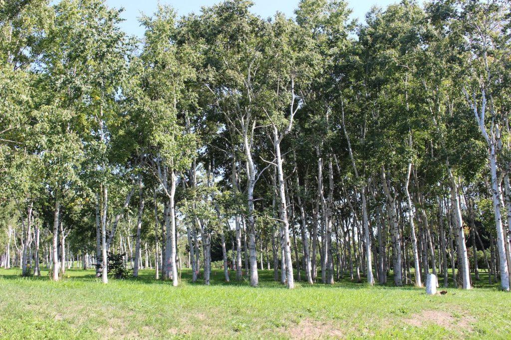 前田森林公園 花木園と芝生広場