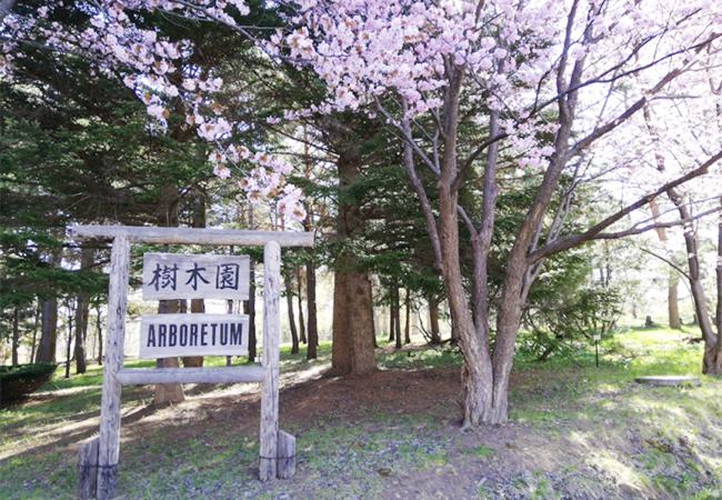 森林総合研究所樹木園