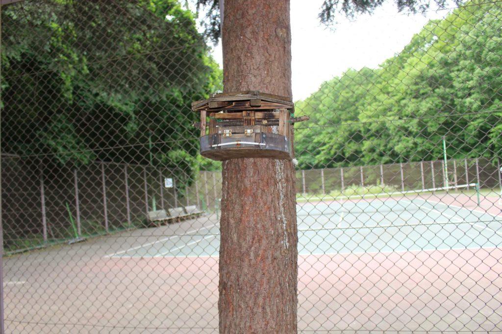 青葉中央公園 りすの巣箱