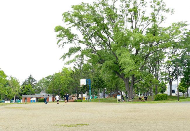 北郷公園バスケット