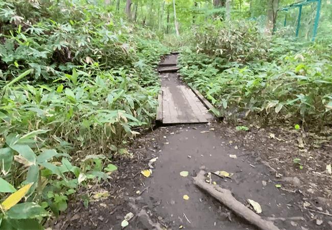 円山登山動物園ルート登山道