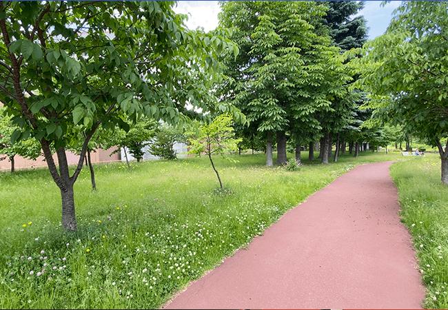 川沿公園園路