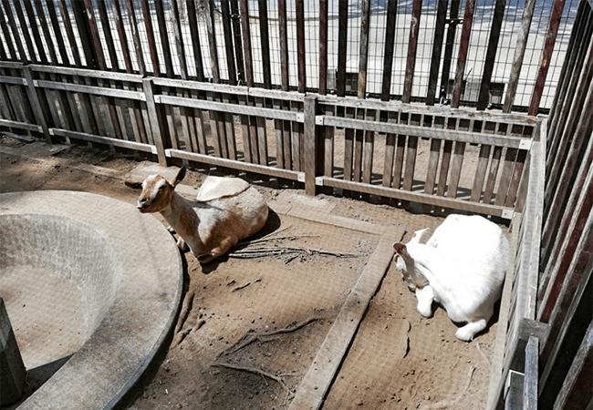 美香保公園動物