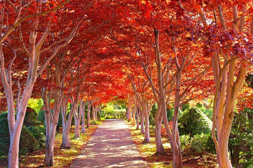 平岡樹芸センター紅葉並木